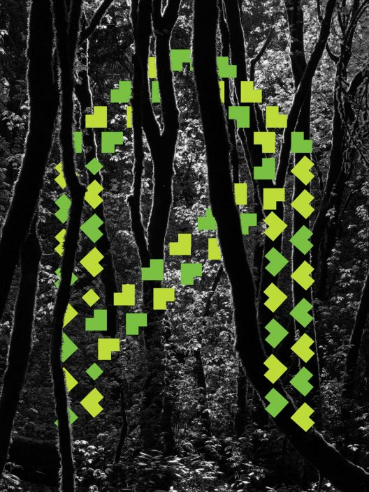 lettrea_trees